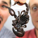 pourquoi-manger-des-insectes