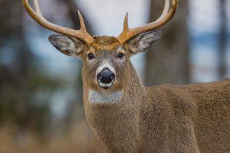 chasser dans la nature