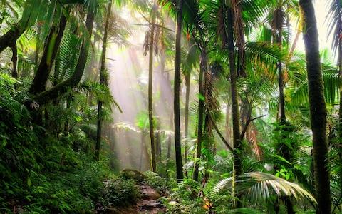 direction-marche-jungle